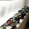〜我が家の多肉植物寄せ植え・冬の様子〜