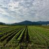 除草機のナイフの交換と除草、そして有機栽培の中耕除草とモンシロチョウとイシガメ