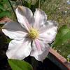新たに咲いた花たち