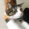 【愛猫日記】毎日アンヌさん#213