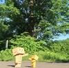 占冠村 不思議な泣く木のある風景
