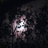 新月日蝕LINDENJI