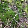 緑の草と苔