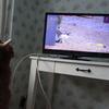 猫が出ているテレビを猫が観る