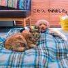 この冬ペットたちに大人気の電気毛布で暖房器具の省スペース化&暖房費節約