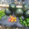 毎日更新90日目【採れたて野菜】お友だちの農家さんで収穫体験!新鮮野菜は通販でも取り寄せ可能