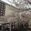 駒込駅前、いいかんじに咲いております♪