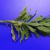 植物(ブルーバック) その10