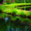 池の道 夏の草花みなもに映して
