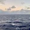 大西洋移動雑記〜ピースボート乗船記