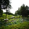 三室戸寺へ紫陽花を撮りに