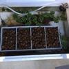 水換え完了 屋外水槽のコンセプトは掃除しやすい水槽!