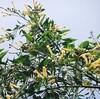 聖書の植物(12)ー「からし種」