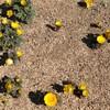 早春の花が咲いている