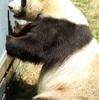 朝からいささかパンダに同情したくなりました。、