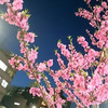 3月15日(木)風が強くてヒリヒリする目と、もう一つの酒場で出会った先輩の笑顔。