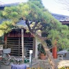 柿の木坂 更科 小岩店