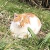 1月2日 河原猫の記録