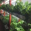カナダにおける植物工場・都市型農業の法制度化が進む