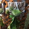 ビカクシダと水草水上栽培とビオトープ