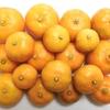 シークワーサー、レモンの収穫