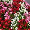 新宿を散歩していたら綺麗な花が咲いていました☆