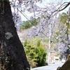 春爛漫の京北取材記
