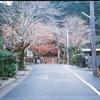 京都山科毘沙門堂・もみじも終わりのころ