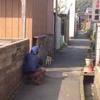 松崎という町で感じたこと