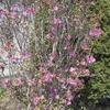 えぃじーちゃんのぶらり旅ブログ~コロナで巣ごもり 北海道石狩市の春編 20210412