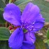 10月23日花と花言葉・歌句