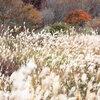 龍宮岩と蒜山高原の紅葉