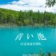 【旅フォト】一度は見ておきたい絶景。美瑛の青い池