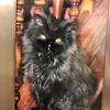 歯車の合わない日:昔猫のタイニーちゃん