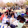 ★I went to the cherry blossom viewing★