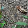 コオロギのせんべいが食料不足を救う