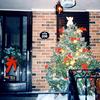 クリスマスはぼっちで静かに過ごす方がよい(。-ω-)ノ