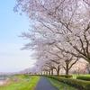 奥行きを意識して桜並木を撮る!『2019年の私の桜』 その1