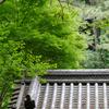 昼散歩 横浜三渓園