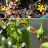 花たちに感じる始まりの季節
