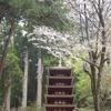 【春の奈良旅3】自然の宝庫 室生寺の奥の院まで登ってみた
