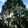 深い瑞の森