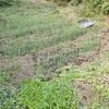暑い中、家庭菜園で除草作業したビフォーアフター