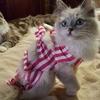昔話し 子猫編10:骨髄生体検査