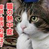 猫ちゃんの熱中症にご注意
