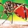 Vientiane Times デング熱、シェンクワン県除くすべての地域で感染が確認