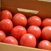 大好き!トマト
