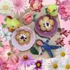 花のはちみつラングドシャ 大阪花ラングさん♪