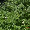 「庭の様子」の記録