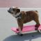 スケートボード見てたら、健康診断行きそびれた